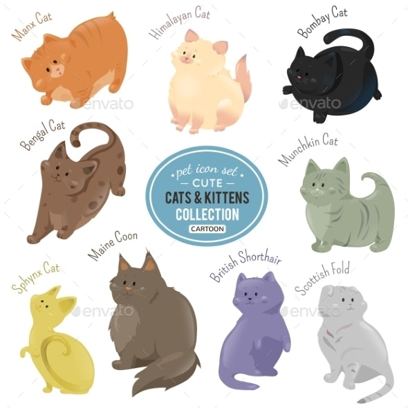 Cats and Kittens Depicting Different Fur - Animals Characters