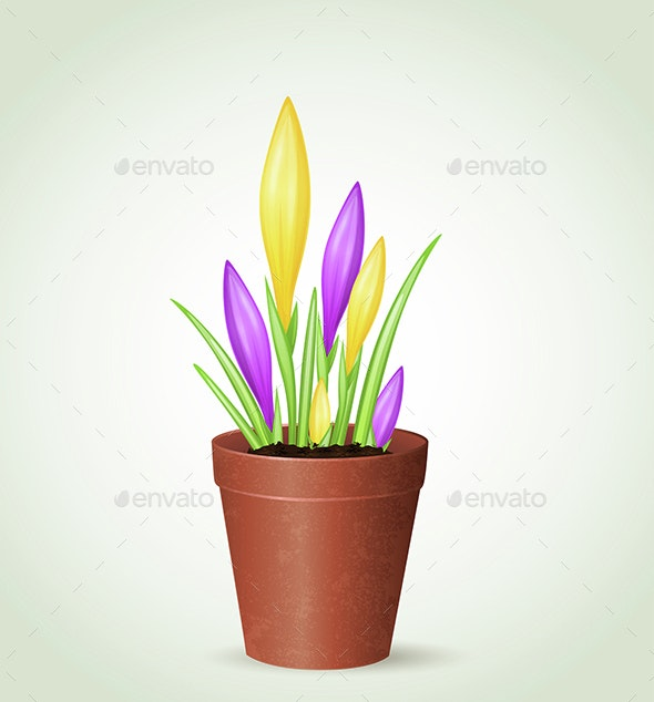 Violet and Yellow Crocuses - Flowers & Plants Nature