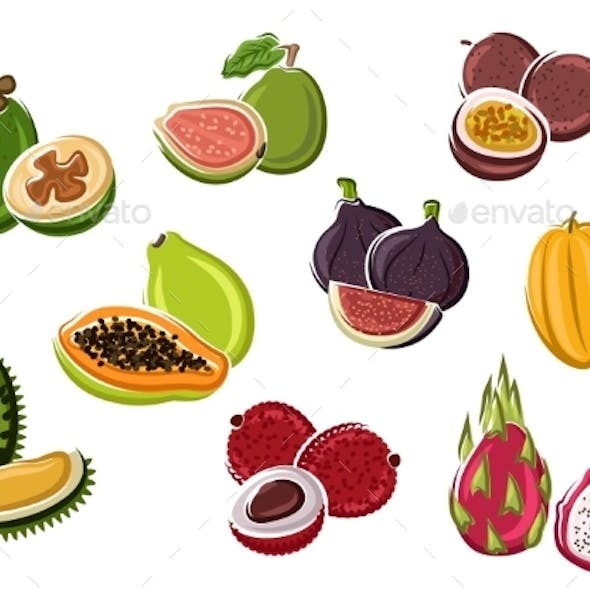 Tropical Fresh Fruits In Cartoon Style