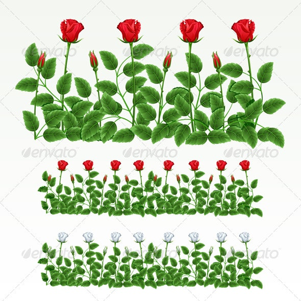Border of roses - Flowers & Plants Nature