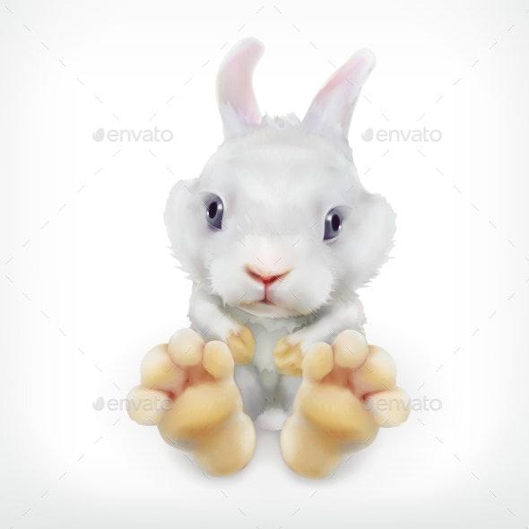 White Rabbit - Animals Characters