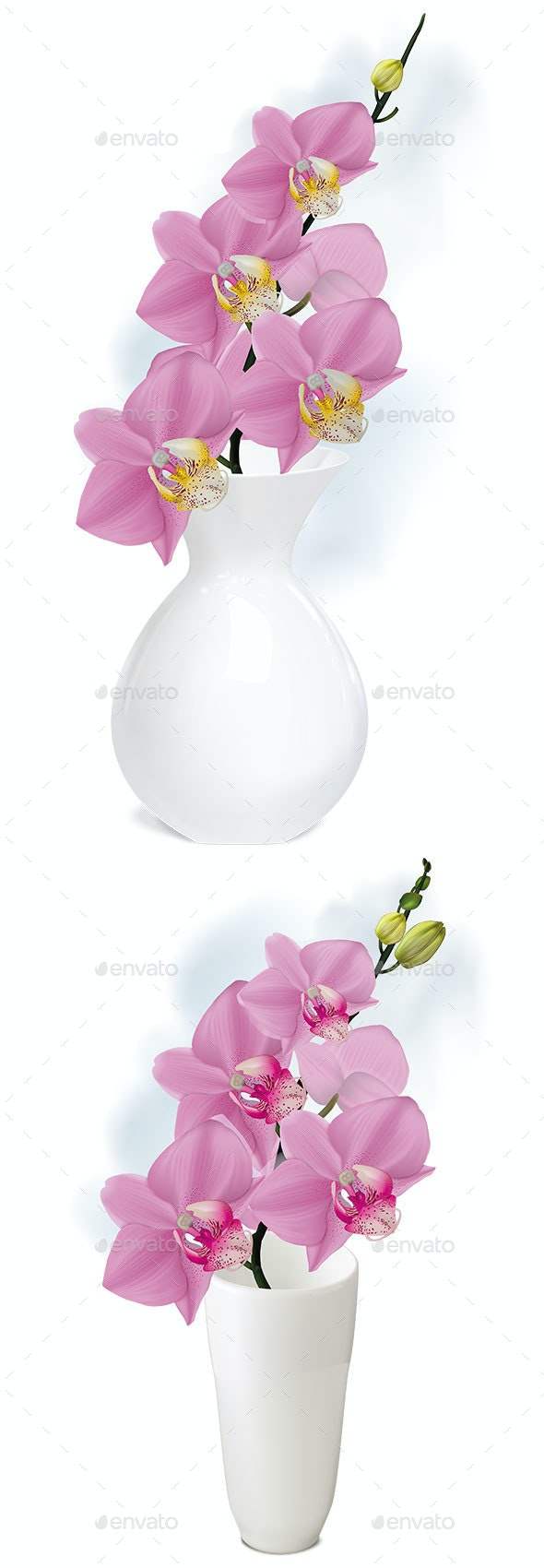 Orchid Branch with Buds in White Vase - Flowers & Plants Nature