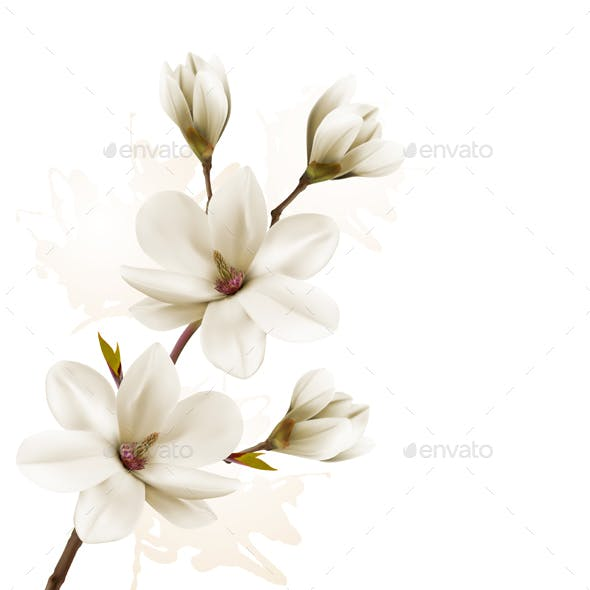 Spring Background with Magnolia
