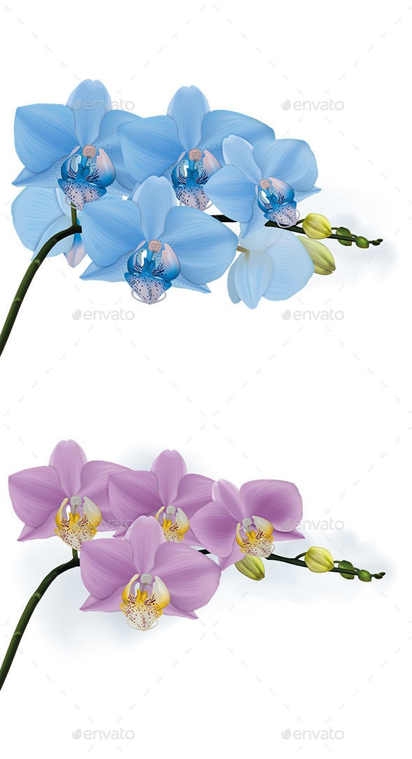 Blue and Lilac Orchid Branches with Buds - Flowers & Plants Nature