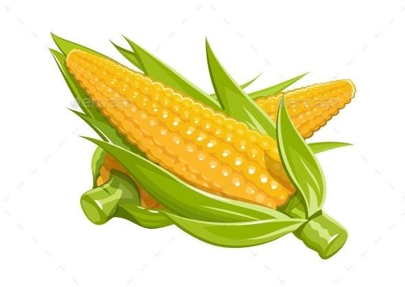 Corn Illustration - Food Objects