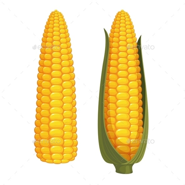 Corn - Food Objects