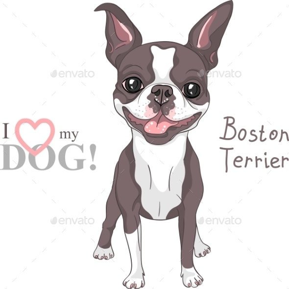 Sketch Dog Boston Terrier Breed Smiling - Animals Characters