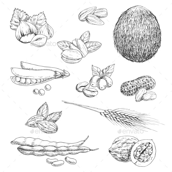 Nuts, Beans, Seeds and Wheat Sketches - Food Objects