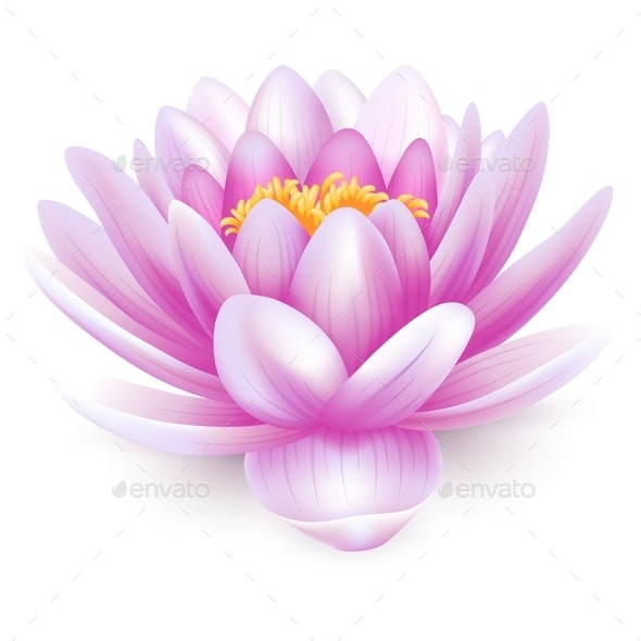 Water Lily - Flourishes / Swirls Decorative