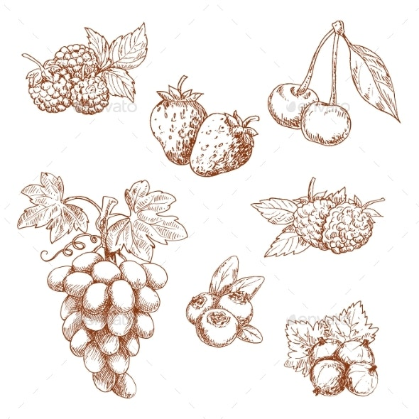 Fruits and Berries Sketch Set - Food Objects
