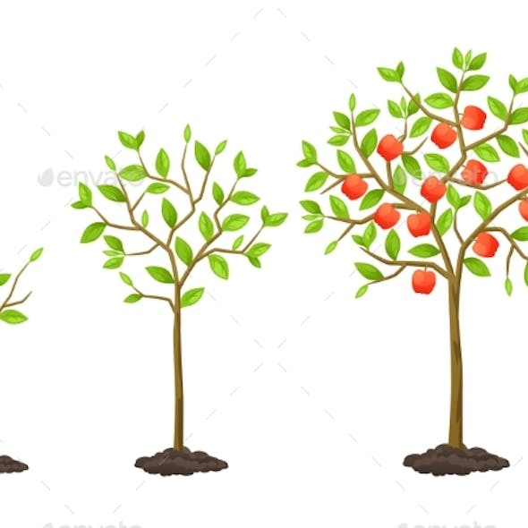 Growth Cycle from Seedling to Fruit Tree
