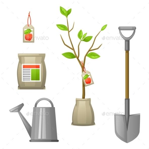 Set of Seedling Fruit Tree - Flowers & Plants Nature
