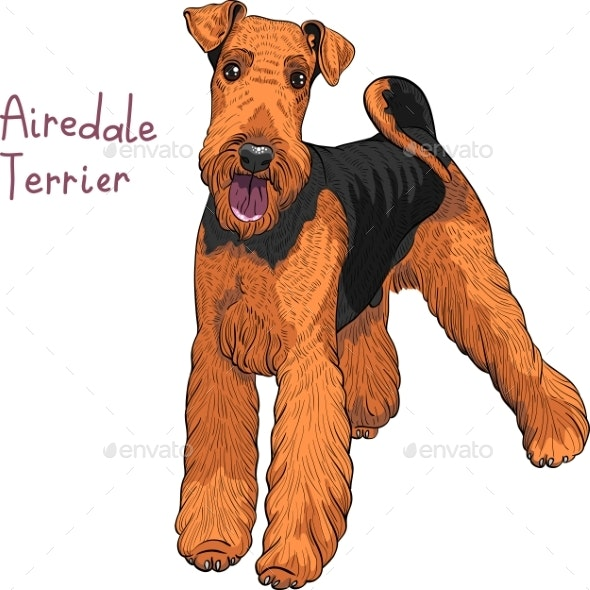 Sketch Dog Airedale Terrier Breed  - Animals Characters