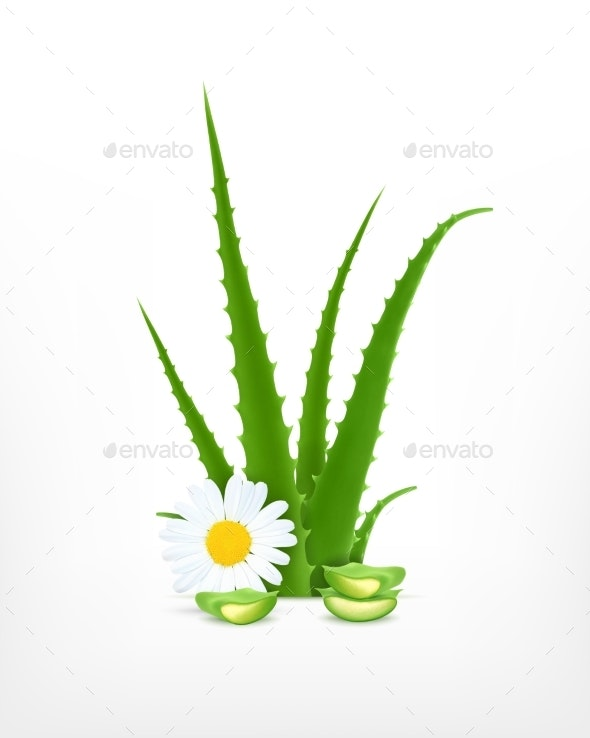 Aloe Vera and Chamomile - Flowers & Plants Nature