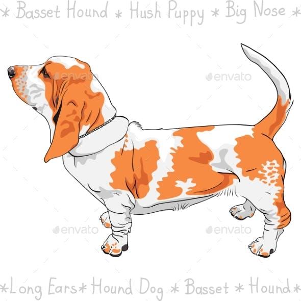 Dog Basset Hound Breed