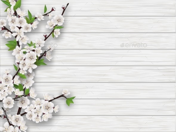 Spring Cherry Branch on White Old Wood Background - Flowers & Plants Nature