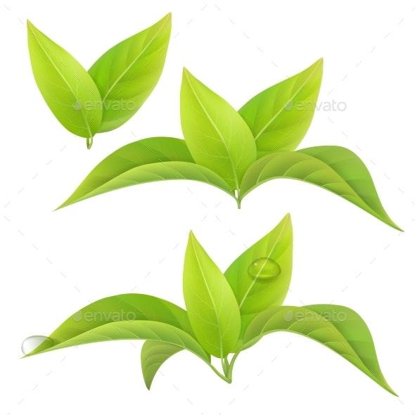 Tea Leaves Isolated - Flowers & Plants Nature
