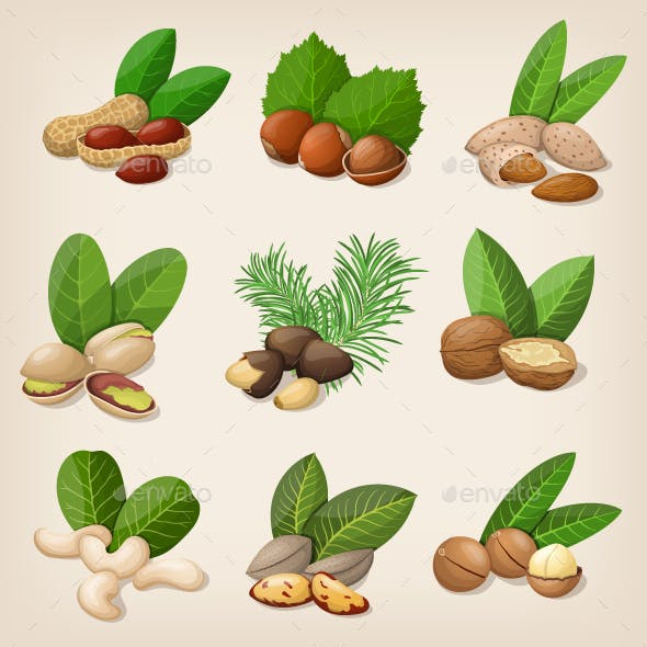Set of Vector Various Nuts