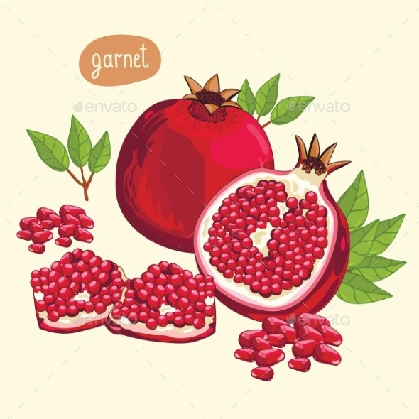 Pomegranate Isolated, Vector. - Food Objects