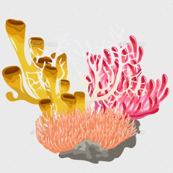 Colorful Corals, Scenery Of Underwater World