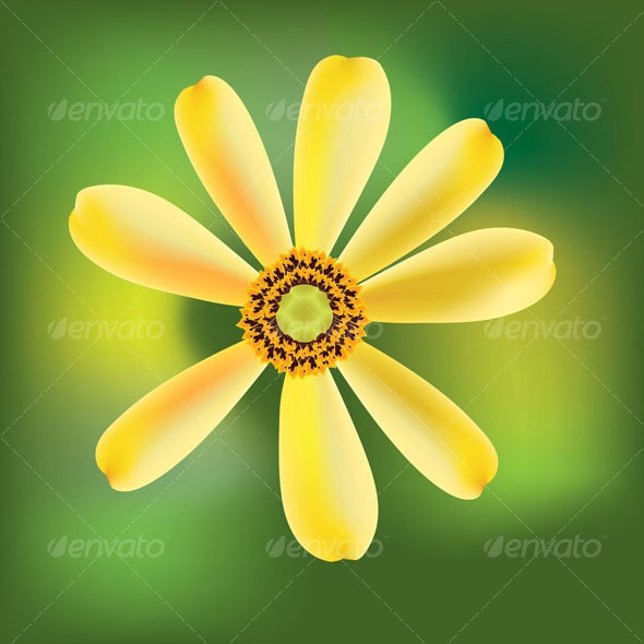 Yellow Daisy - Nature Backgrounds