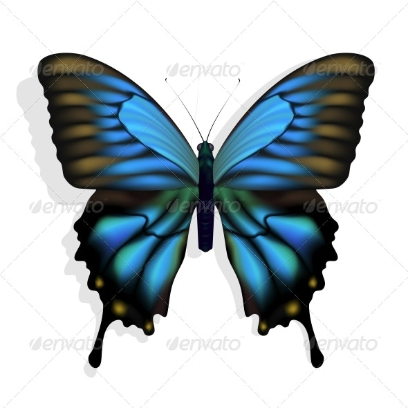 Blue Butterfly - Animals Characters