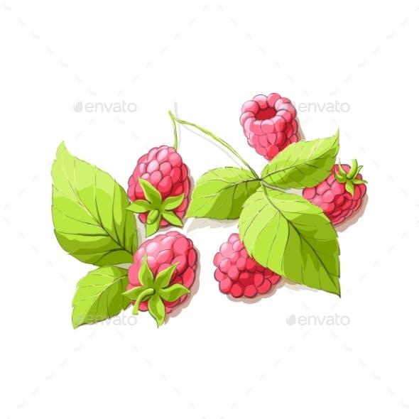 Ripe Raspberry Illustration