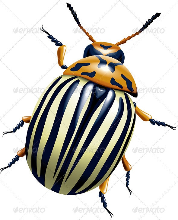 The Colorado Potato Beetle - Animals Characters