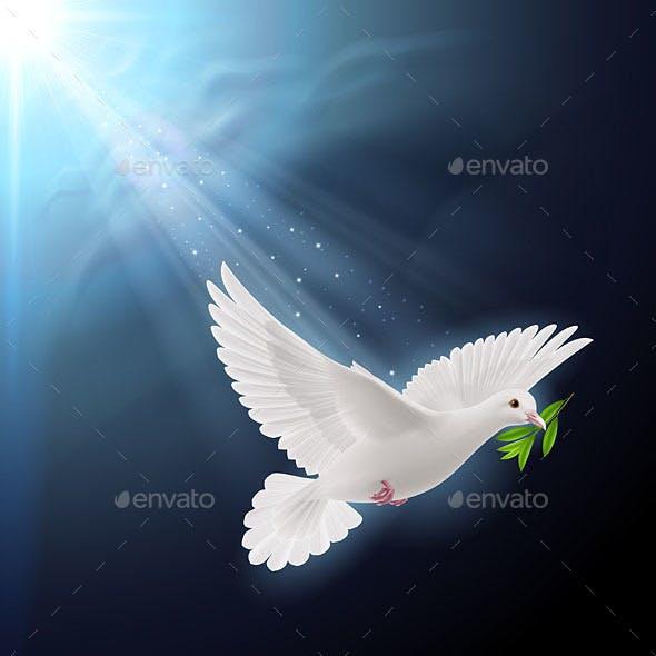 Flying Dove in Sunlight