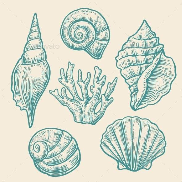 Sea Shell Set Vintage Color Engraving