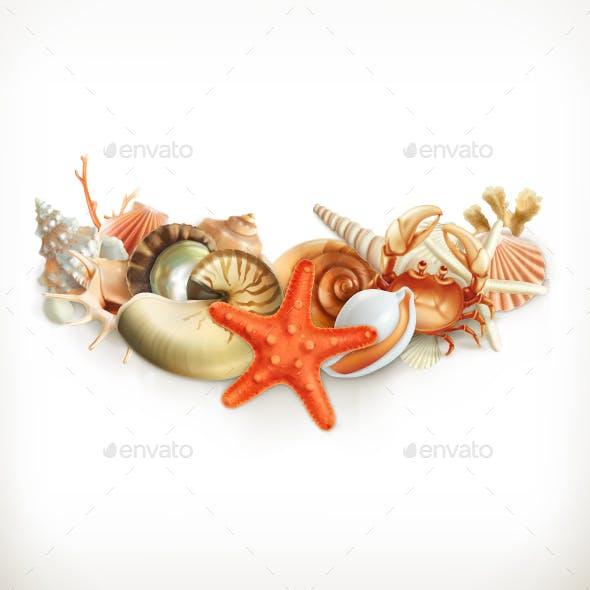 Seashells Illustration
