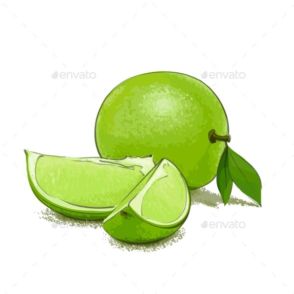 Ripe Lime and Slice