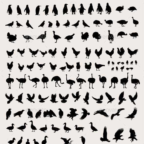 Bird and Fowl Silhouettes
