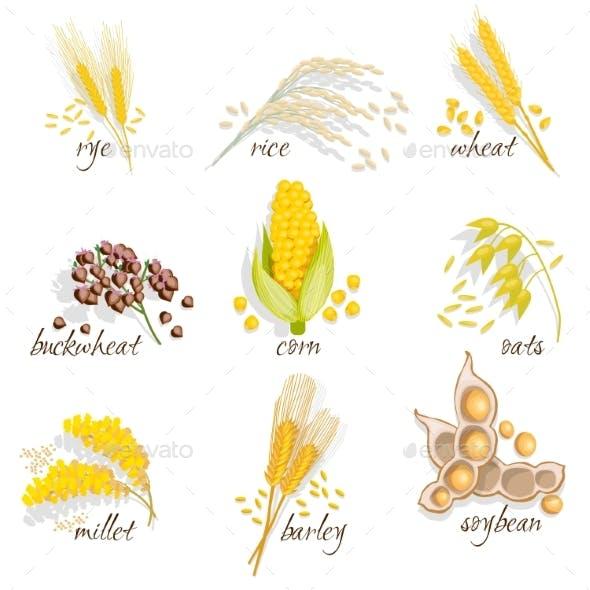 Cereals Icon Set