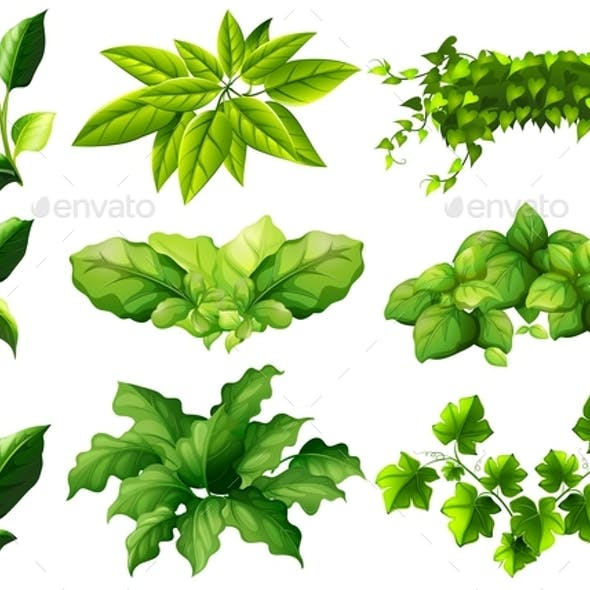 Different Kind of Leaves