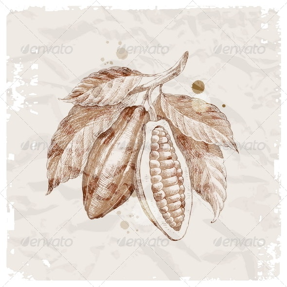Hand Drawn Branch With Cocoa Beans - Food Objects