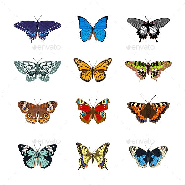 Set of Realistc Butterfly Icons
