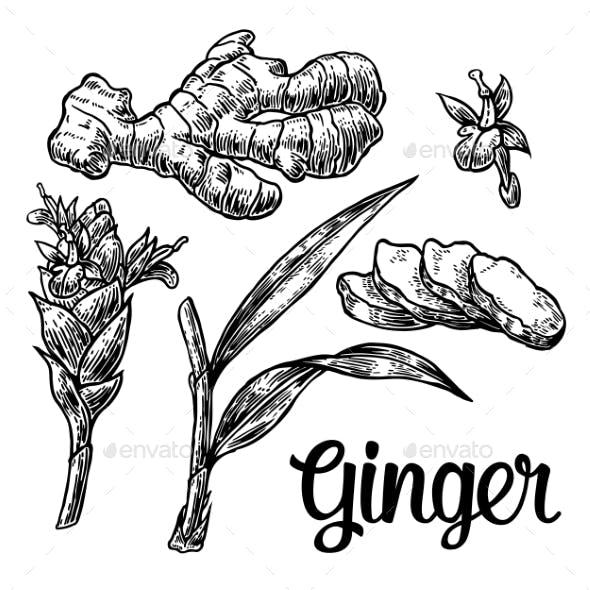 Ginger Set