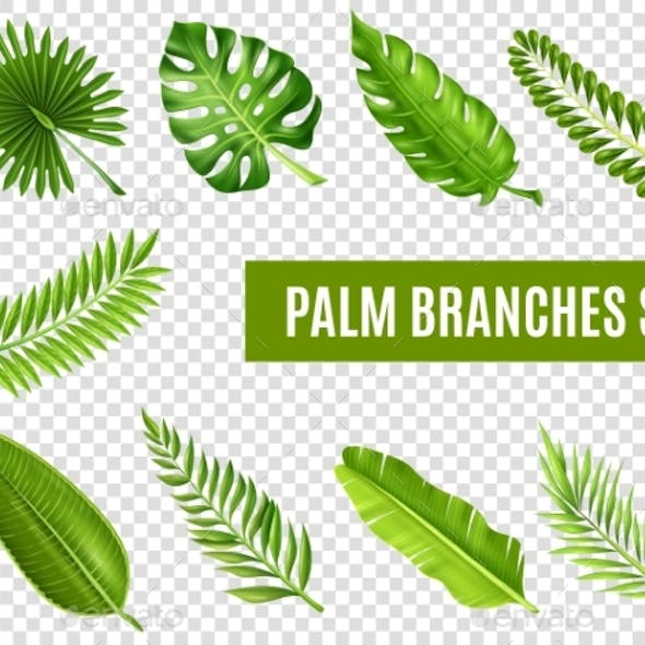 Palm Tree Branches Set