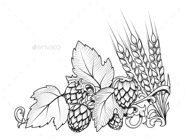 Hops and Barley Ornament Vector Illustration by