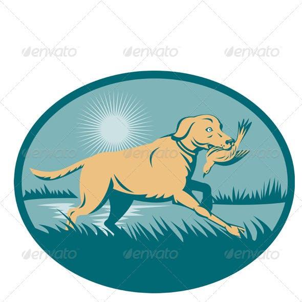 Golden Retriever Hunting Dog With Bird