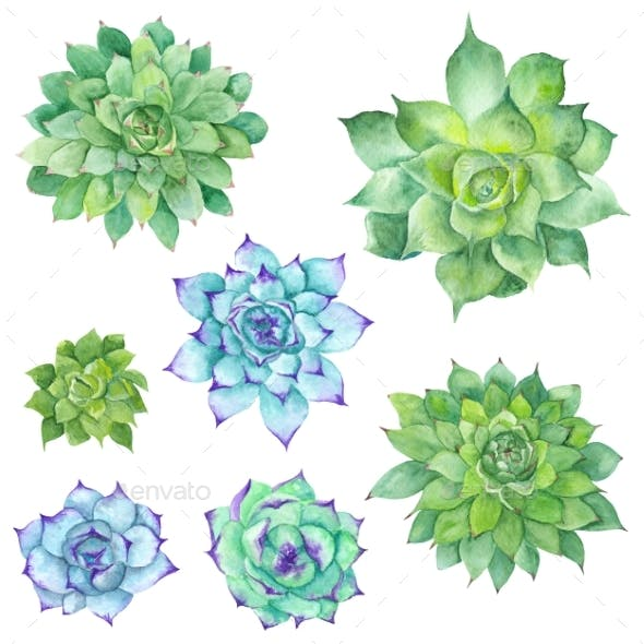 Watercolor Succulents Set