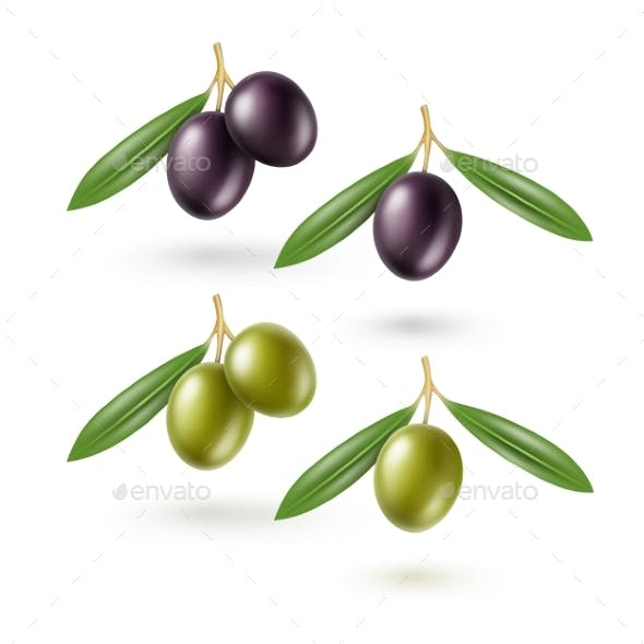 Black Green Olives Branches Leaves Isolated White