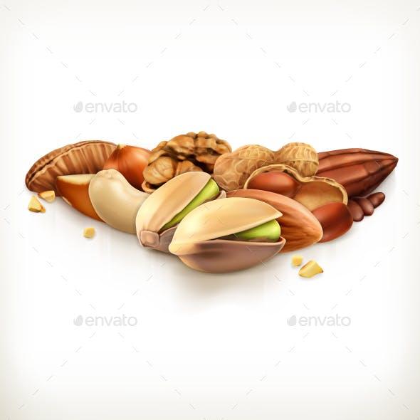 Nuts Vector Illustration