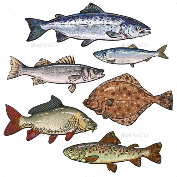 Colorful Sea Fish Sketch Style Collection Isolated