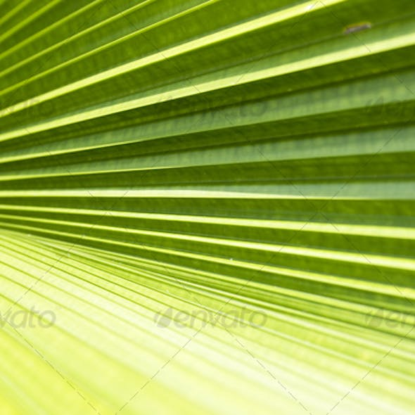 Palm leave texture