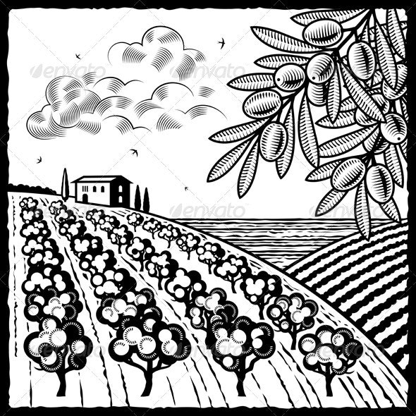 Landscape With Olive Grove Black And White - Landscapes Nature