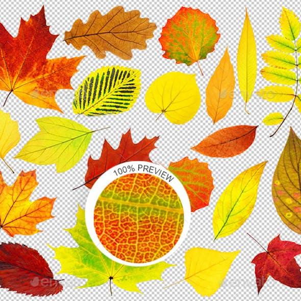 20 Autumn Leaves