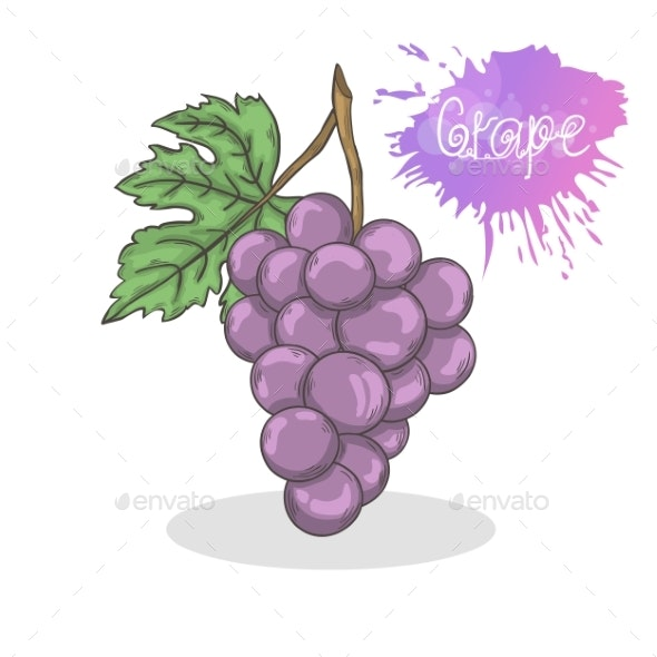 Purple Grape Vector Illustration - Food Objects