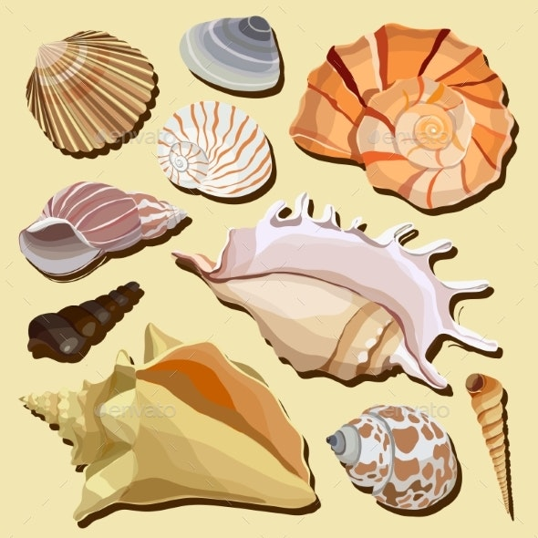 Set of Isolated Hand Drawn Seashell Icons - Organic Objects Objects